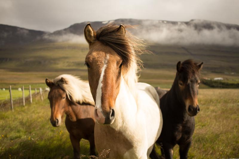 """""""Memory"""" &  """"Horses"""""""
